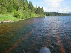 Aquatechnex biologists applying Rhodamine WT dye to simulate aquatic herbicide application